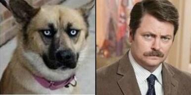 Celebrity Dogs 17