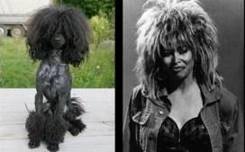 Celebrity Dogs 3