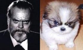 Celebrity Dogs 4