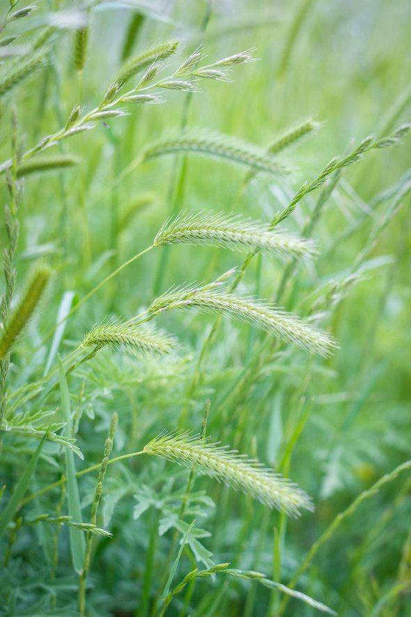 Grasses An Unrefined Vegan