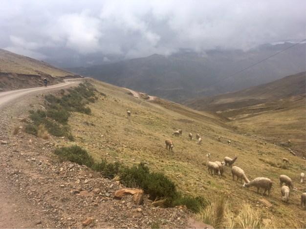 Climbing out of Viñas