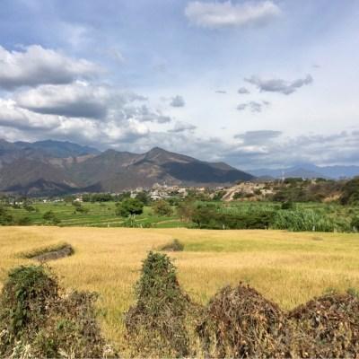 Hola Ecuador's green scenery