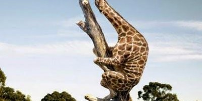 Sueño de jirafa