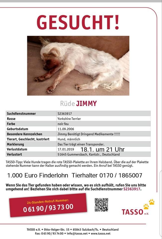 Rüde Jimmy wird vermisst (1000 € Finderlohn)