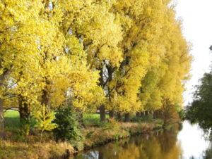 Foto Herbstliche Flusslandschaft