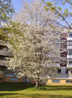 Frühling auf dem SBK-Gelände (Foto: U. Sommer)