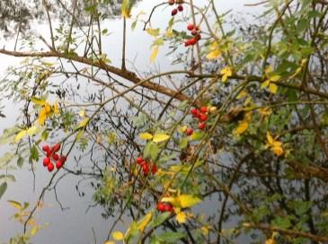 Herbst an der Ahr