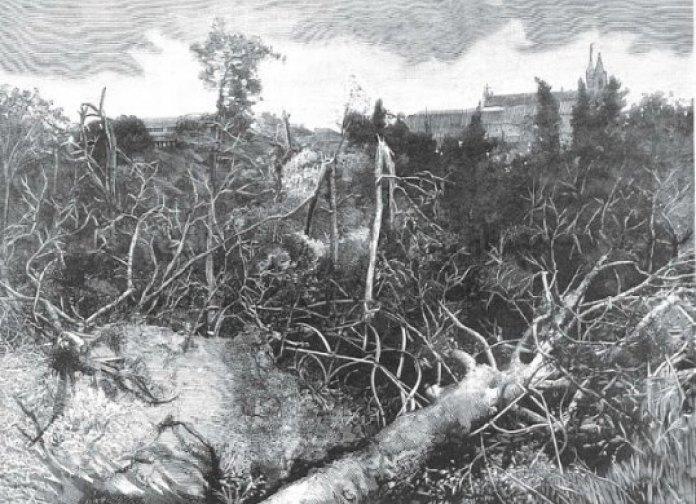 El jardín Botánico visto desde el Sur publicado en La Ilustración Española y Americana. Al fondo se ve el convento de los Jerónimos.