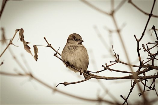 sparrow-in-the-tree