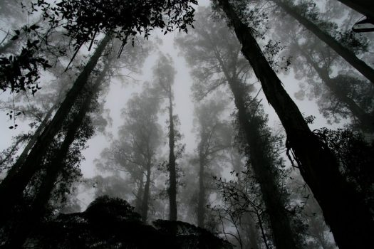 forest-1030832_1280