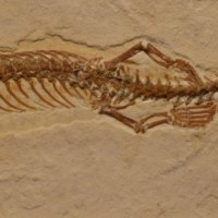 Scientists Discover 113-Million-Year-Old Snake Fossil With Four Legs
