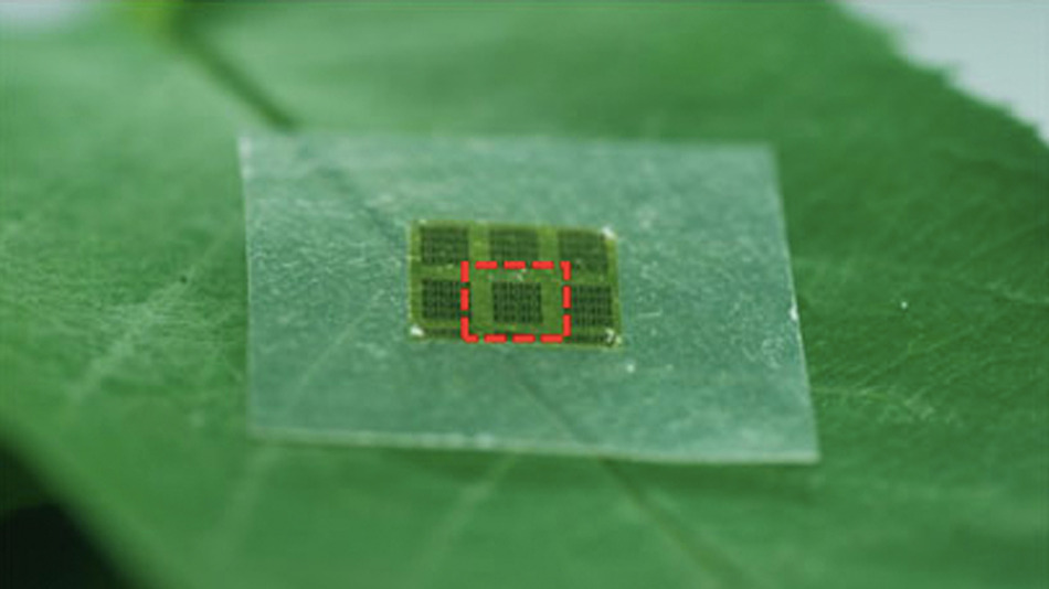 Biodegradable Wood-Based Computer Chips
