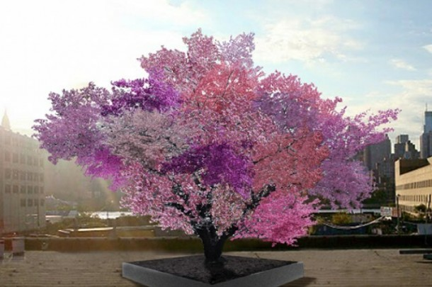 Tree That Can Bear 40 Different Fruits At Once