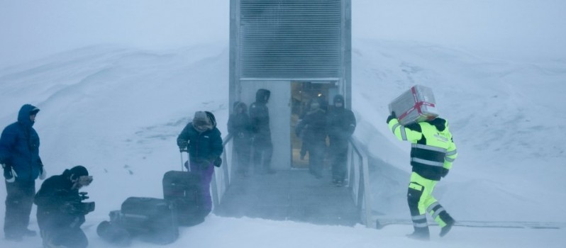 First Ever Withdrawal Of Seeds From Doomsday Vault (2)