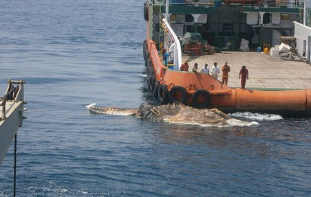 01-strange-creature-found-persian-gulf-whale