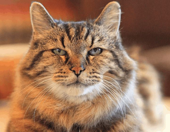 The Oldest Living Cat In the World