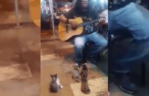 Kittens Watching A Street Performer