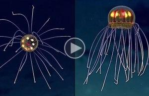 Super Rare Jellyfish