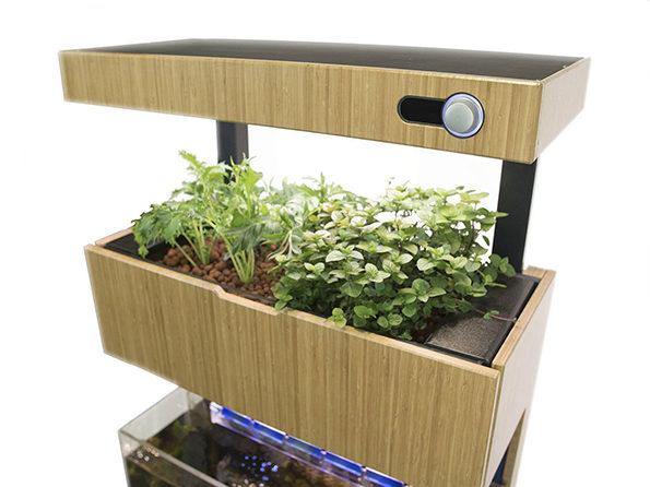 Self-Sustaining Garden And Aquarium Combo