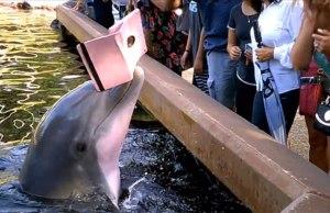 Dolphin Steals Woman's iPad