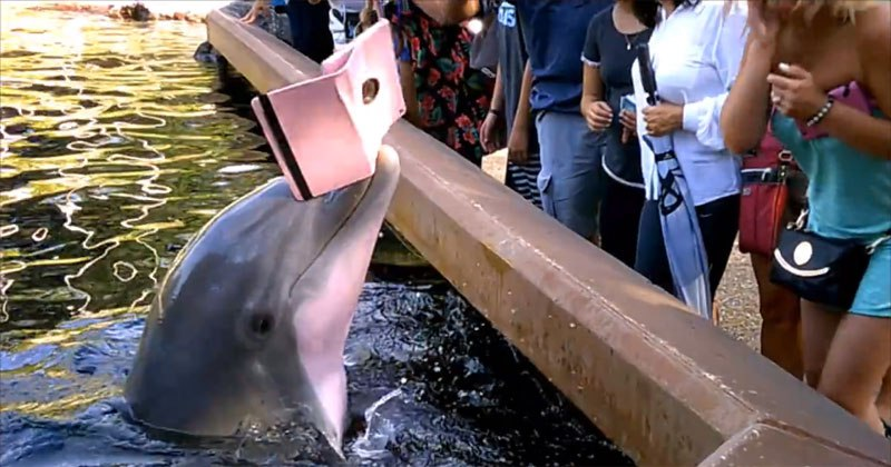 Dolphin Steals Woman's iPad