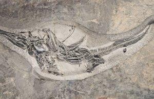Million Years Old