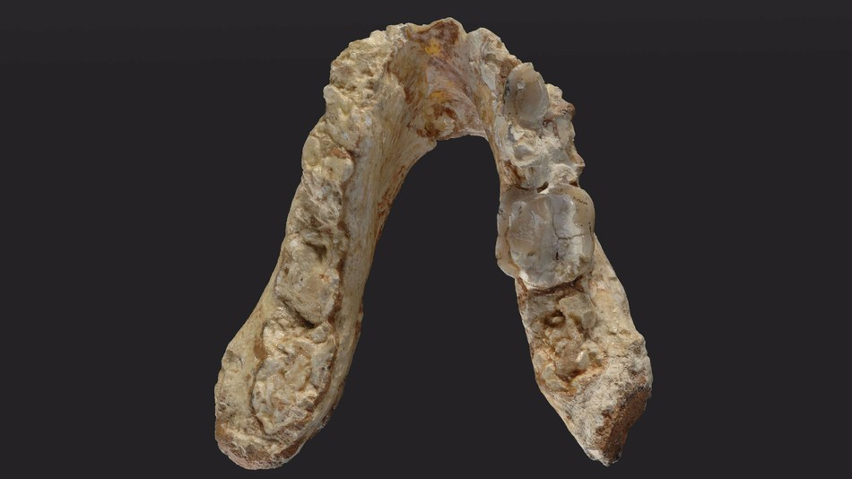 7-Million-Year-Old Teeth Suggests Humans Birthplace is Europe Not Africa