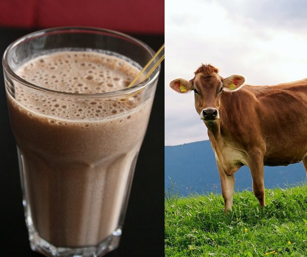 Survey Reveals Millions of Americans Think That Chocolate Milk Comes From Brown Cows