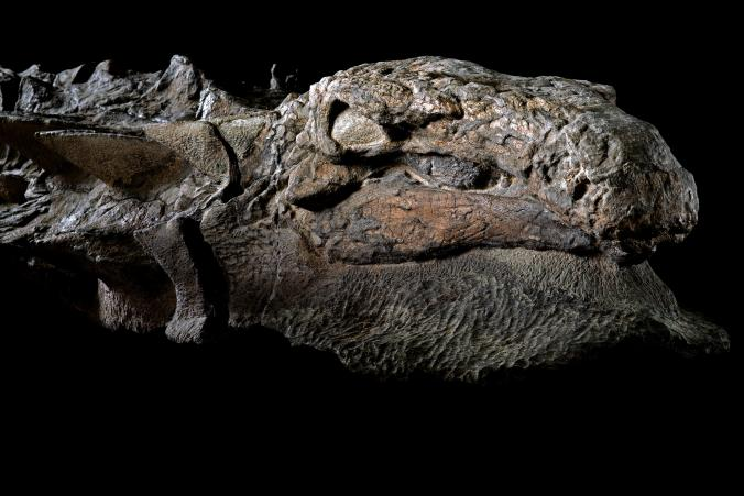 Dinosaur Species Discovered