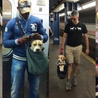 The MTA Banned Dogs on the Subway Unless They Fit in a Bag, New York Improvised