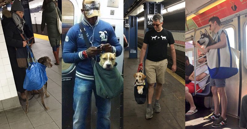 MTA Banned Dogs