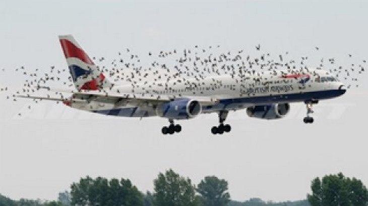 planes birds