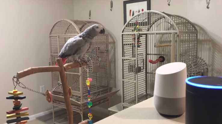 Parrot Having a Conversation With Alexa After Telling Her to Turn Off the Lights
