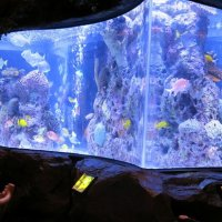 A Fish Tank's Thermometer Was Hacked To Access Casino's Database