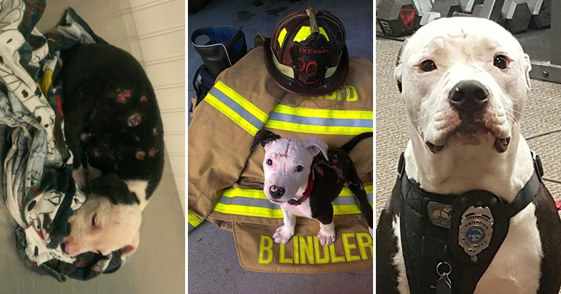 Jake, the Puppy Saved From a Fire, And Now He is a Firefighter