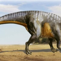 Scientists Found the Largest Dinosaur from Japan