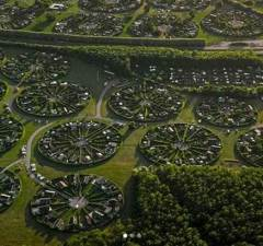 Circular Community Gardens