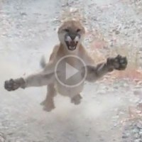 Utah Man Chased by Cougar for 6 Full Terrifying Minutes