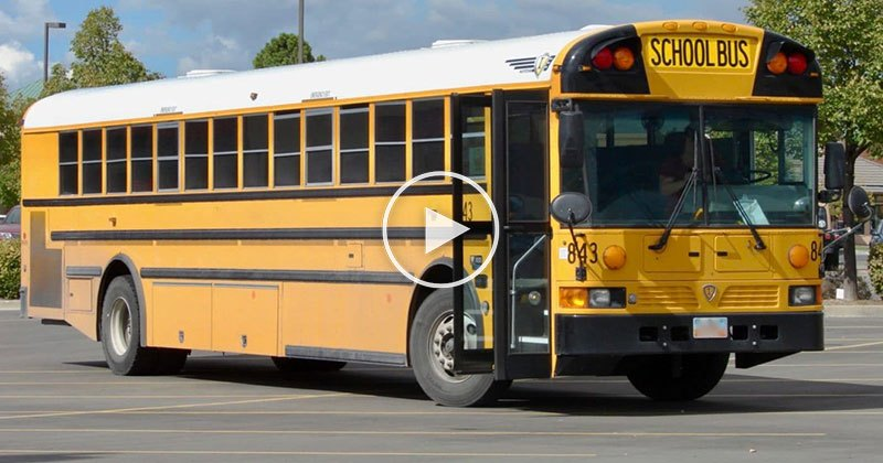 Black Lines on a School Bus Explained