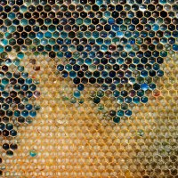 Blue Honey Mystery Solved: Bees Visiting Local M&M Factory