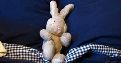 Travel Bunny in Repose