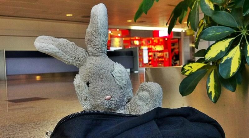 Travel Bunny Leaves Spain