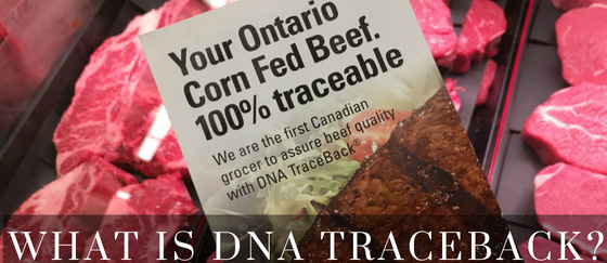 Know Your Beef - What is DNA Traceback?