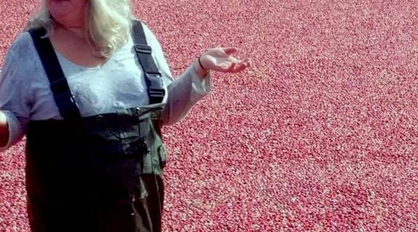 Lex in the cranberry bog