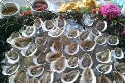 Pemaquid oysters