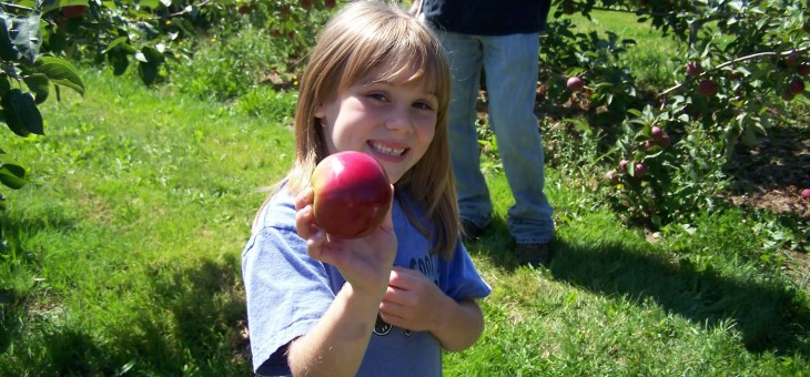 Where to Pick Apples in Maine for the 2017 Season