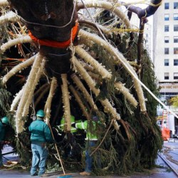 10 Fun Facts About NYC's Rockefeller Center Christmas Tree