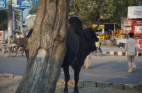 Ein alltägliches Straßenbild in Delhi