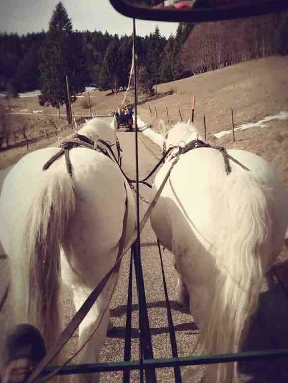Eine Kutschfahrt in Schwarzwald, Winterausflug Pferde