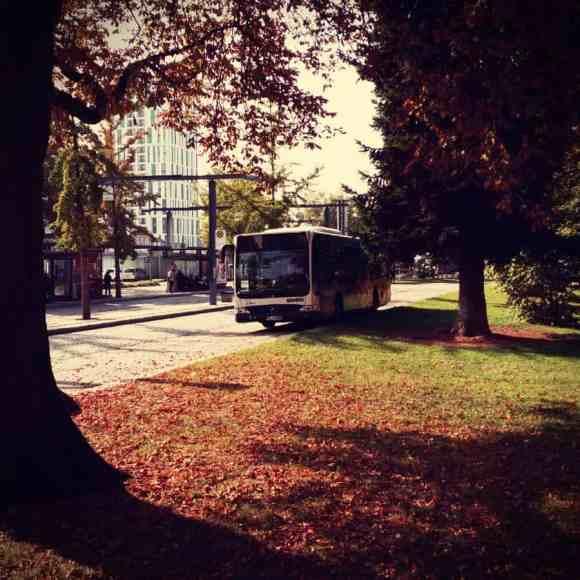 Herbstlaub am Busbahnhof Lörrach